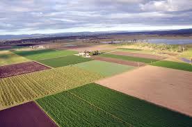 Gatton Farm